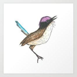 PURPLE CROWNED FAIRY WREN Art Print