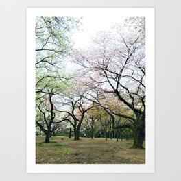 twisty cherry blossom trees Art Print