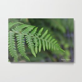 green fern leaves. floral nature wild plant photography. Metal Print