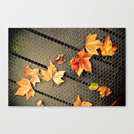 Trail of Leaves Canvas Print
