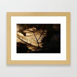 the life of a leaf Framed Art Print