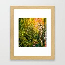 bamboo tunnel Framed Art Print