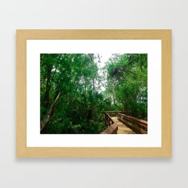 Pathway through the Jungle Framed Art Print
