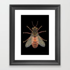 Bee (Abeille) Framed Art Print