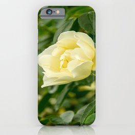 City of York Rose iPhone Case