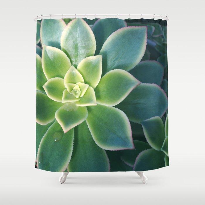 Succulent Plants - Nature Photography Shower Curtain
