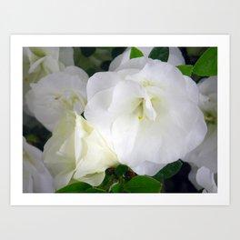 White Azalea Art Print