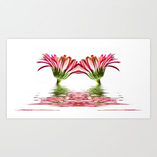 Double Pink Gerbera Flood  Art Print