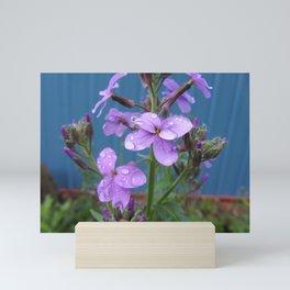 Dew Drops Mini Art Print