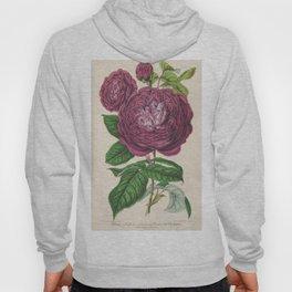 Rose, 355 Hoody