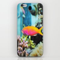 life aquatic iPhone & iPod Skins featuring Life Aquatic by JustAlly