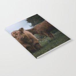 Scottish Highland Cattle Calves - Babies playing II Notebook