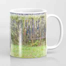 Outdoor portrait of a red miniature pinscher dog sitting on the grass Coffee Mug