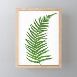 Fern leaf Framed Mini Art Print