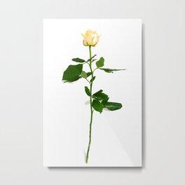 Yellow Rose (Color) Metal Print