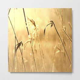 Foggy Morning With Golden Tones Metal Print