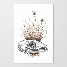 Shrew Skull Canvas Print