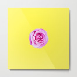 pink rose with yellow background Metal Print