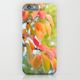 Sun shines through colorful autumn leaves at Maruyama Park in Kyoto. iPhone Case
