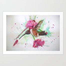 Pink Hummingbird Art Print