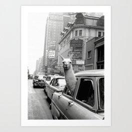Llama Riding In Taxi Art Print