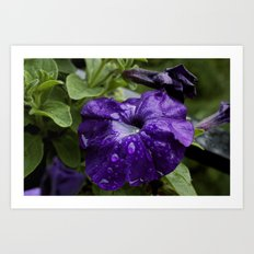 Water logged flower Art Print