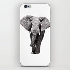 African Elephant 2 iPhone & iPod Skin