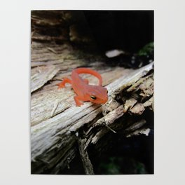 The Charismatic Newt Poster