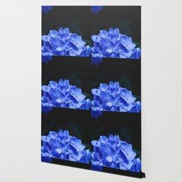Hydrangeas Wallpaper