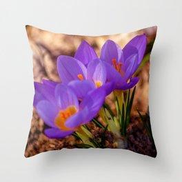 Concept nature : Crocus etruscus in silva Throw Pillow