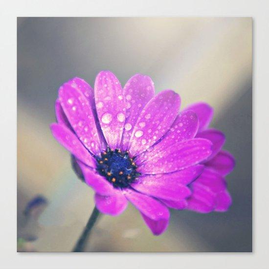 Sunshine flower purple Canvas Print