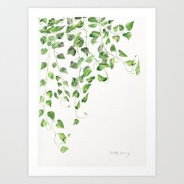 Golden Pothos - Ivy Art Print