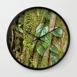 Vine and Moss on Tree in the Rainforest Wall Clock