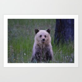 The most adorable grizzly bear cub in Jasper National Park | Canada Art Print