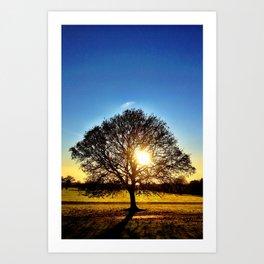 Tree of Life - Malahide Park Art Print