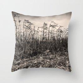Corn Field 15 Throw Pillow