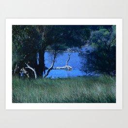Black Swan Lake Art Print