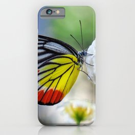 Asian Painted Jezebel butterfly iPhone Case