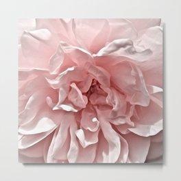 Pink Blush Rose Metal Print