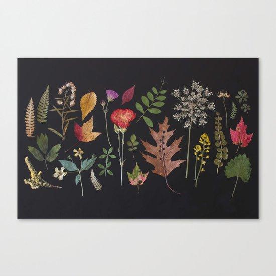Plants + Leaves 4 Canvas Print