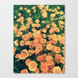 Golden Fields of California Canvas Print