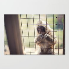 Arashiyama Monkey Canvas Print