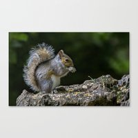 squirrel Canvas Prints featuring Squirrel by Fine Art by Rina