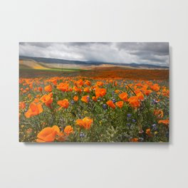 California Superbloom Metal Print