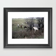 Horses All in A Row Framed Art Print