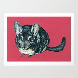 Chinchilla on red Art Print
