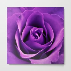 Purple Passion Rose Metal Print