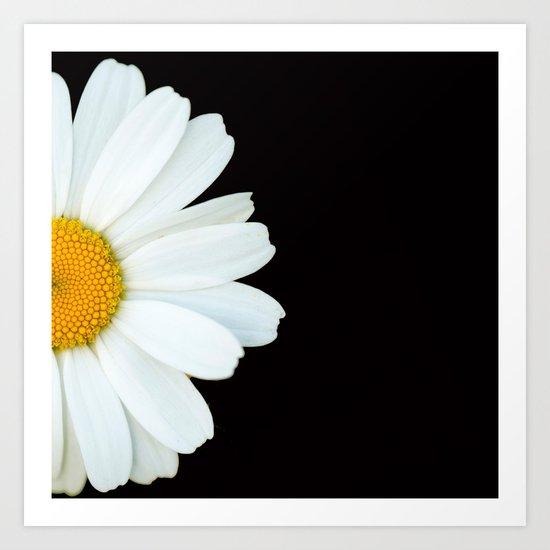Hello Daisy - White Flower Black Background #decor #society6 #buyart by pivivikstrm