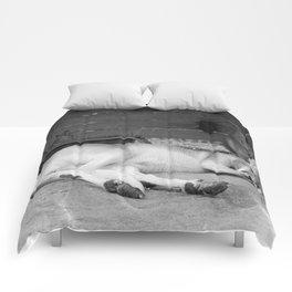 sleepy head Comforters