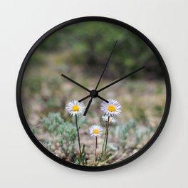 Daisies in Colorado Wall Clock